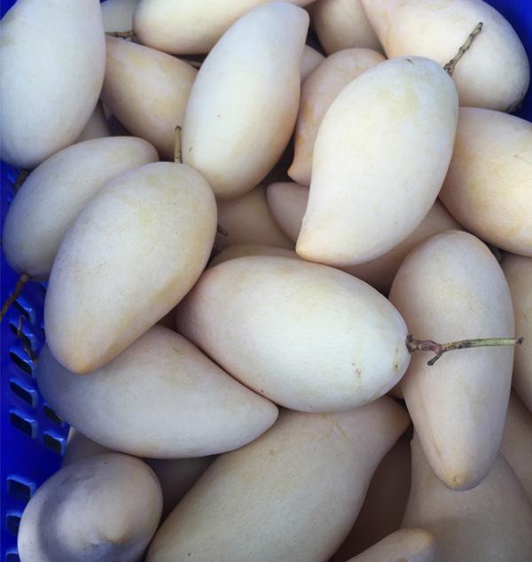 exporter of Namdok Mai Mango